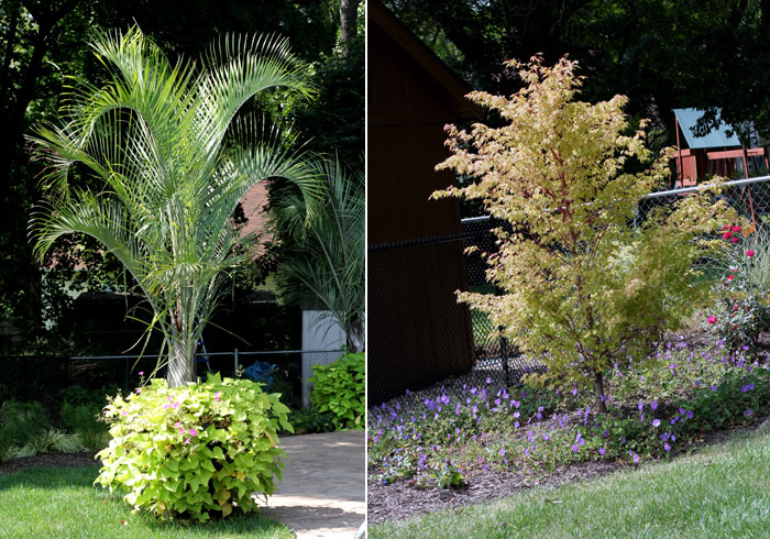 Potted Palm & Planted Trees