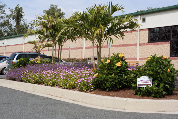 Business Landscaping - The Arena Club